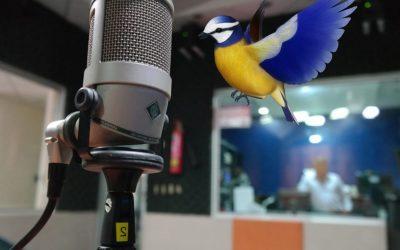Entrevista Torrevieja Radio
